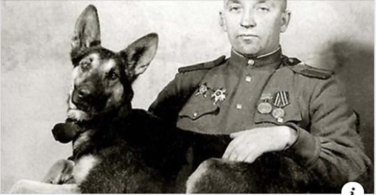 Джульбарс. Этого пса на Параде Победы несли на руках