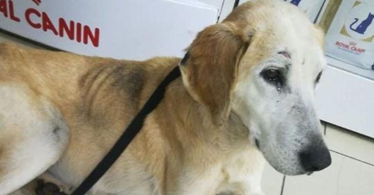 Хозяин оставил слепую собаку зимой в полях, но её спасли волонтеры