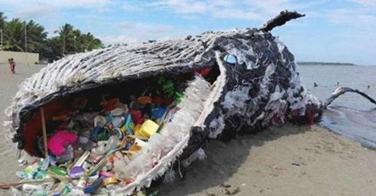 В желудке кита обнаружили 40 килограммов пластиковых пакетов