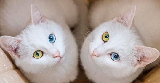 Парень не смог разлучить двух кошечек сестричек и теперь они стали звездами интернета