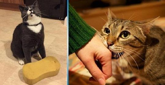 10 способов, с помощью которых кошка выражает свою любовь к вам. Не многие знают об этом