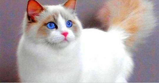 15 поверий о кошках.
