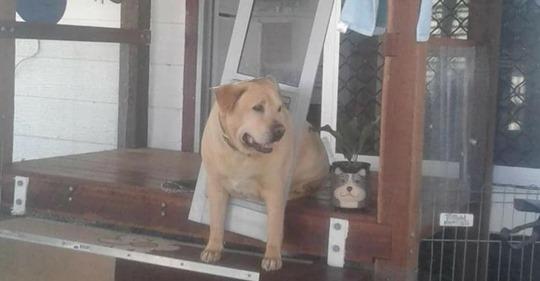 Девушка на время отъезда попросила своего парня присмотреть за собакой