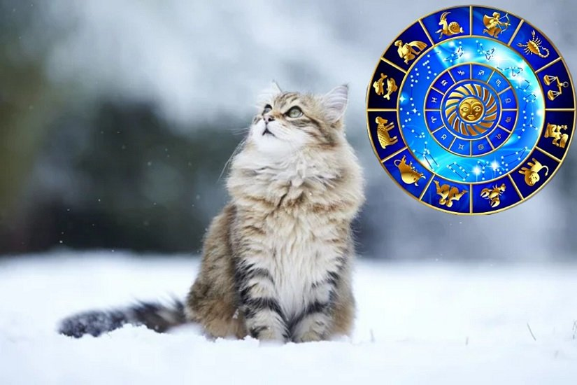 Животные покровители для каждого знака зодиака