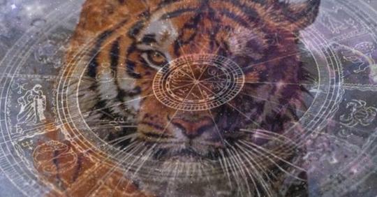 2022 год Тигра: гороскоп для всех Знаков Зодиака