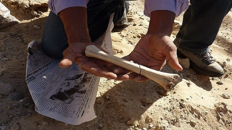 Археологи обнаружили вТунисе новые доказательства ранней миграции человека изАфрики