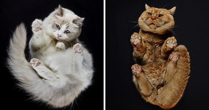 Кошки. Видснизу
