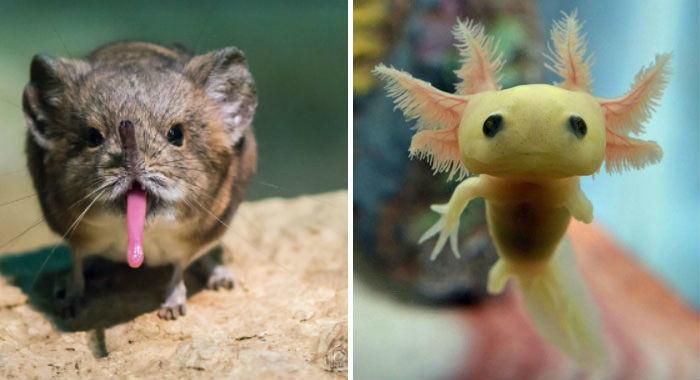 Детеныши редких животных, которых вывряд ливидели