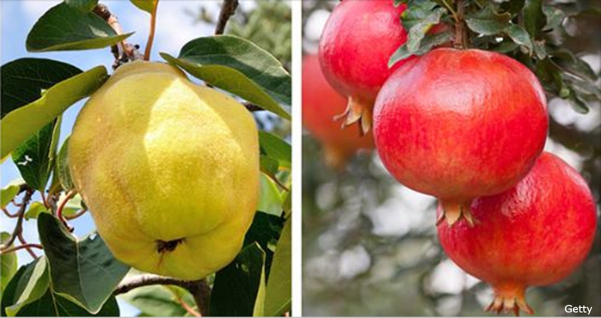 Сможете ли вы узнать свои любимые фрукты на дереве?