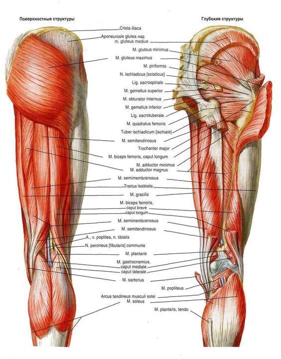 Упражнения для укрепления мышц в области тазобедренных суставов