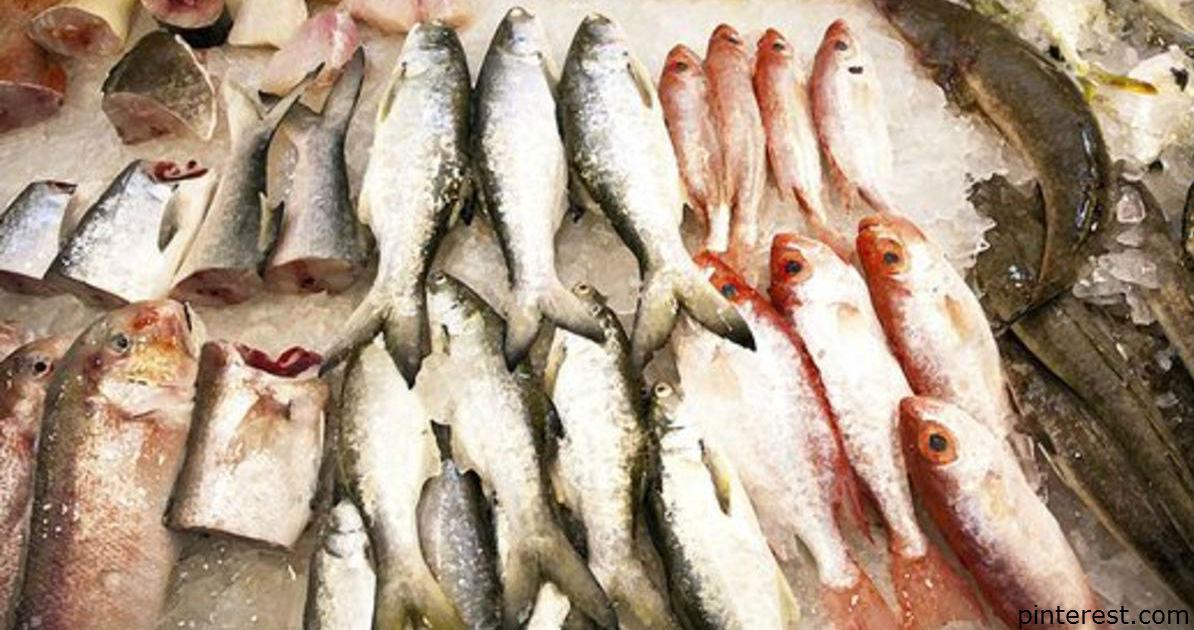 8 видов рыб, от которых лучше держаться подальше