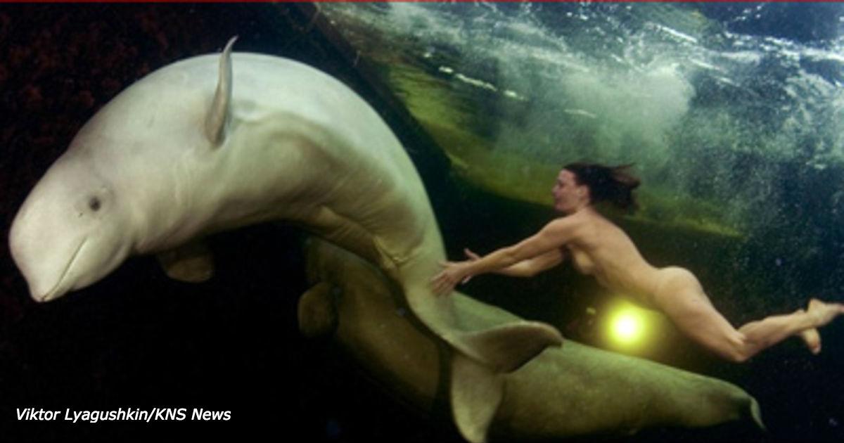 Смотрите, как голая женщина ученый пытается приручить белух подо льдами Арктики