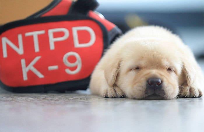 Встречайте самых очаровательных полицейских курсантов в мире!