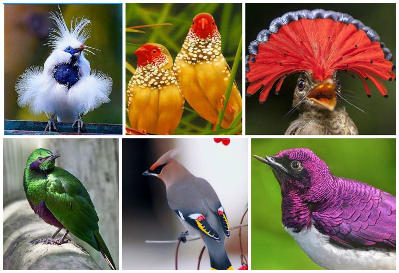 Поразительное великолепие фауны   20ярких птичек невеличек