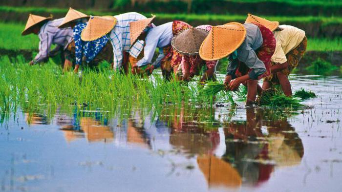 Население Вьетнама: численность и этнический состав