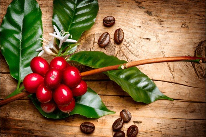 Бизнес идея: Выращивание кофейных деревьев