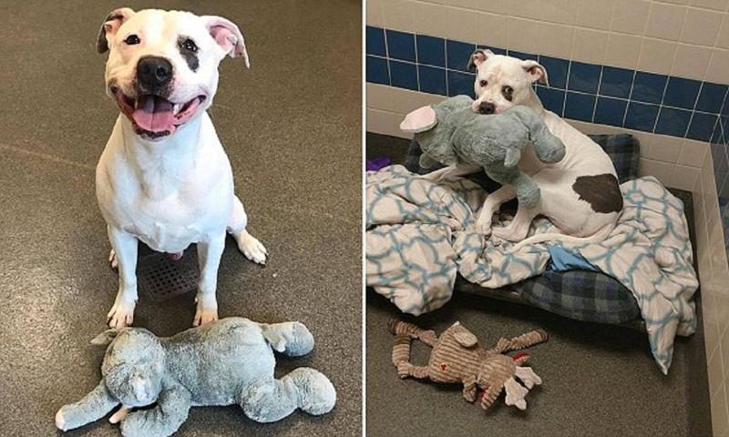 Спасенная собака научилась улыбаться