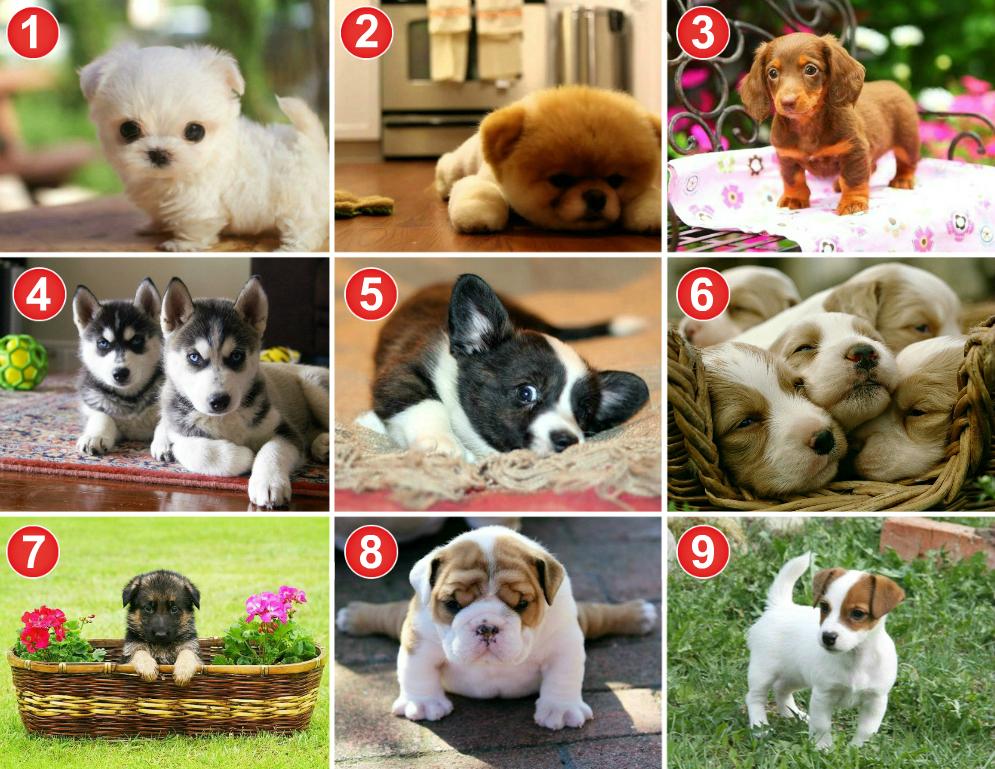 Выберите одну собачку и мы угадаем ваш самый страшный кошмар!